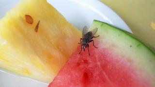 éviter mouche sur alimentation facilement