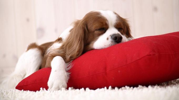 L'Astuce Vraiment Efficace pour s'Endormir Sans Stress.