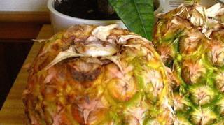 faire murir ananas rapidement