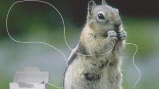 fil dentaire écureuil
