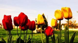 fleurs arrosage