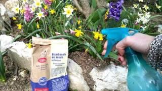 fongicide naturel jardin bicarbonate insecticide