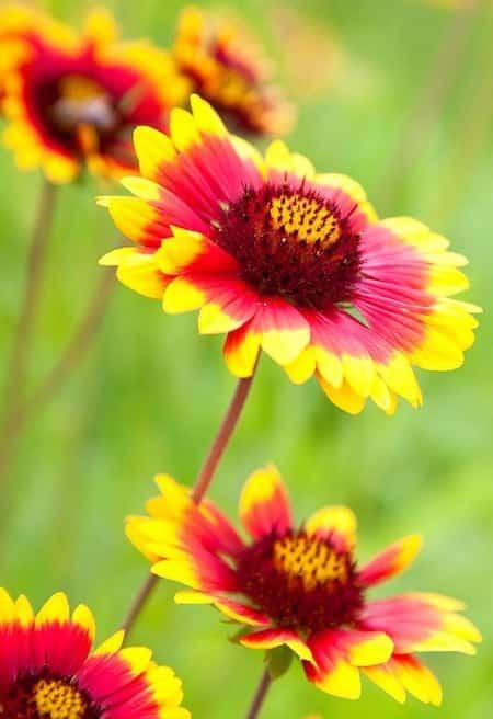 24 plantes qui poussent dans votre jardin sans eau ou - Plantes qui ne craignent pas le gel ...