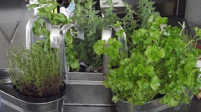 Conserver des Herbes Fraîches Facilement en les Congelant.