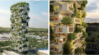 immeuble-habitations-vegetalise