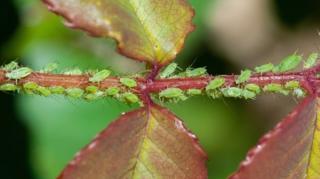 insecticide naturel jardin