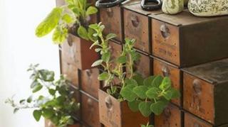 jardin aromates intérieur maison idées
