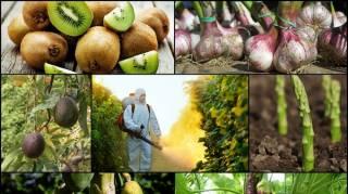 Liste des fruits les plus contaminés par les pesticides