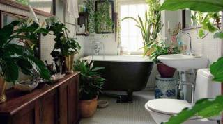 Liste des plantes qui purifient l'air maison