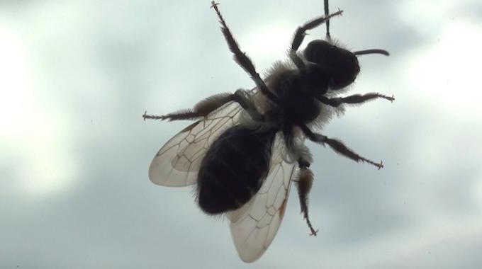 Liminer les mouches dans la maison gallery of astuce n for Astuce contre les mouches dans la maison