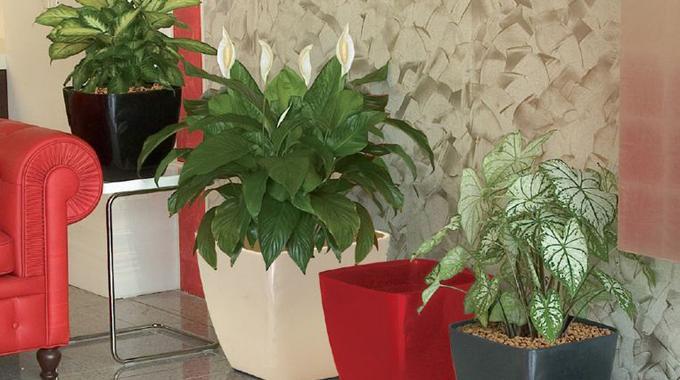 Du marc de caf pour les plantes une super astuce de grand m re - Comment faire bruler du marc de cafe ...