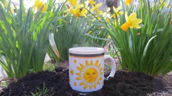Le marc de caf un tr s bon engrais gratuit pour vos plantes - Marc de cafe engrais quantite ...