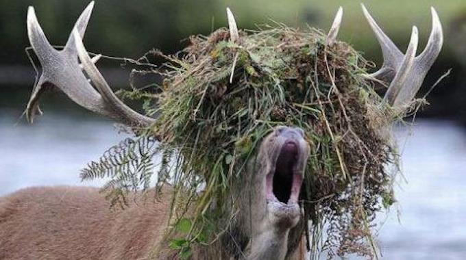 L 39 astuce surnaturelle pour tuer les mauvaises herbes sans produits chimiques - Comment tuer les mauvaises herbes ...