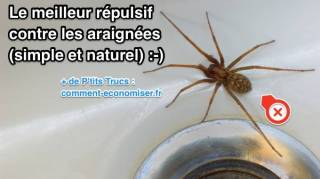 Meilleur répulsif contre les araignées naturel