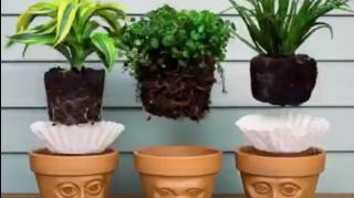 mettre filtre cafe pots fleurs