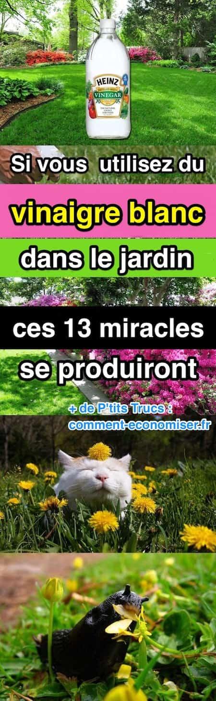 Si vous utilisez du vinaigre blanc dans le jardin ces 13 miracles se produiront - Vinaigre blanc pour le linge ...