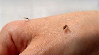 moustiques-piqures