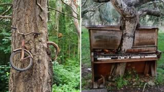 nature reprend droit civilisation envahit