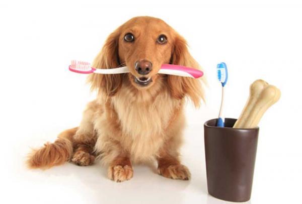 Une brosse à dents pour nettoyer les ongles de chiens