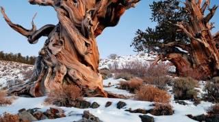 photos-arbres-plus-remarquables