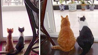 photos chats avant après amour