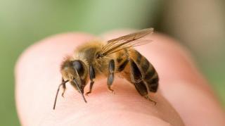 piqûre abeille remède pour soulager