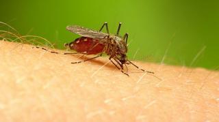 piqure-moustique-soigner-sel