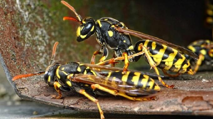3 astuces naturelles pour eloigner les gu pes. Black Bedroom Furniture Sets. Home Design Ideas