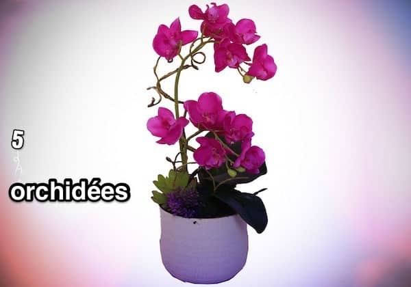 une orchidée rose dans un pot