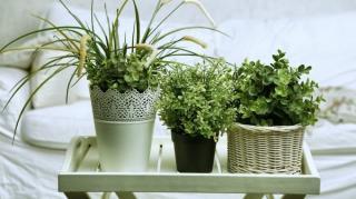 plante qui améliore air santé