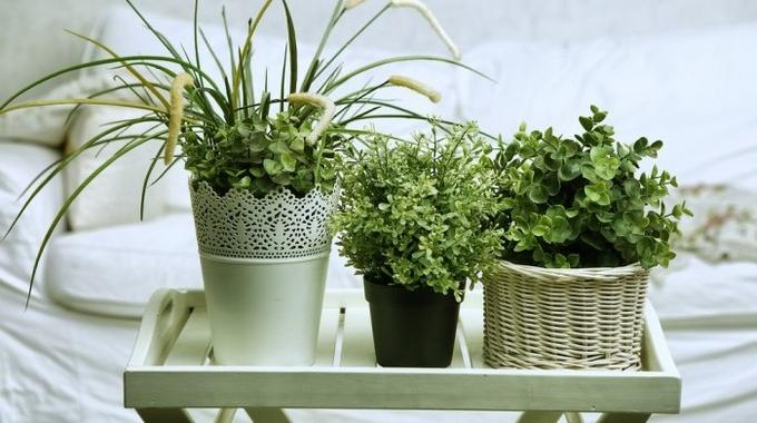 6 plantes faire pousser dans votre chambre pour am liorer votre sant - Plantes qui poussent dans l eau ...