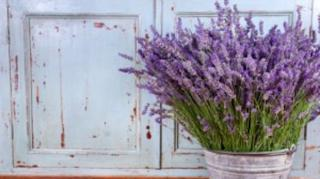 Plantes Anti-Moustiques efficaces