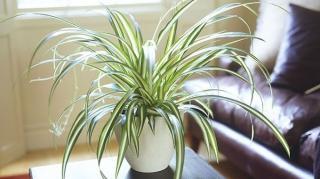 plantes dépolluantes maison