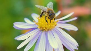 plantes et fleurs pour aider abeilles
