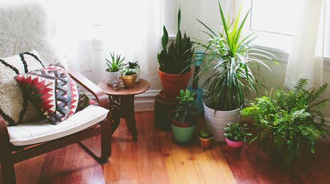 4 astuces pour des plantes d 39 int rieur en pleine forme - Astuces redecorer interieur ...