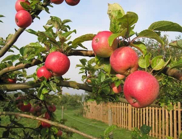 les 10 fruits et l gumes les plus contamin s par les pesticides. Black Bedroom Furniture Sets. Home Design Ideas