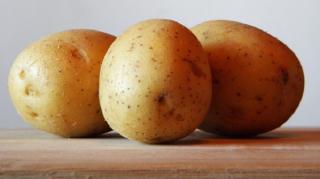 pommes de terre gazon