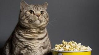 popcorn récipient