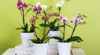 pots-fleurs