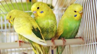 produit nettoyant cage oiseau rongeurs
