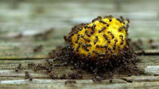 produits communs pour débarrasser fourmis