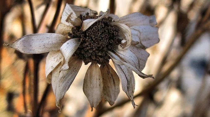 L 39 astuce pour bien prot ger vos plantes en hiver for Plante en hiver