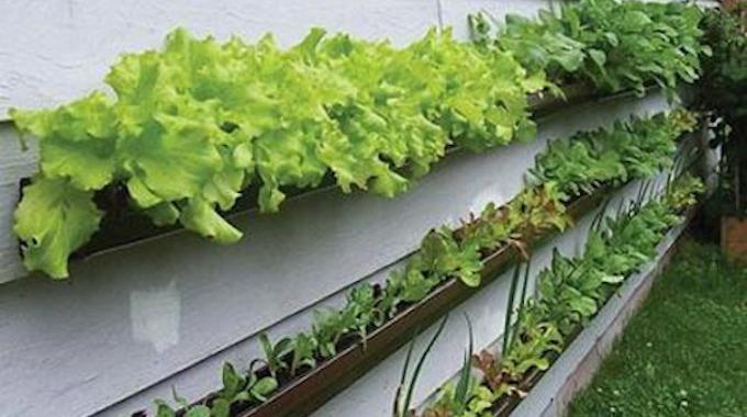 l 39 astuce de jardinier pour prot ger votre potager des lapins. Black Bedroom Furniture Sets. Home Design Ideas