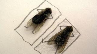 que faire contre les mouches