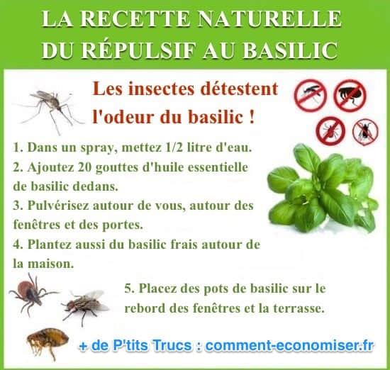 La recette du r pulsif au basilic que tous les insectes - Quelle huile essentielle contre les punaises de lit ...