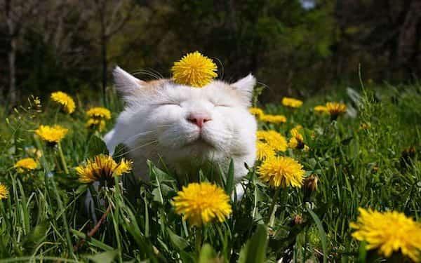 Si vous utilisez du vinaigre blanc dans le jardin ces 13 miracles se produiront - Repulsif pour chats dans les jardins ...