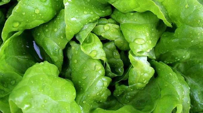 Mon astuce pour r cup rer une salade fl trie en 20 minutes for Ver de la salade