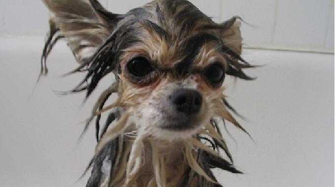 le shampoing fait maison que votre chien va adorer. Black Bedroom Furniture Sets. Home Design Ideas