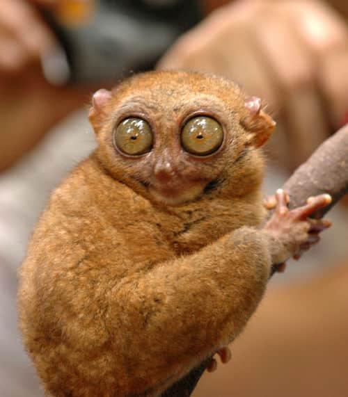 15 photos d 39 animaux totalement surpris par ce qu 39 ils - Animaux a gros yeux ...