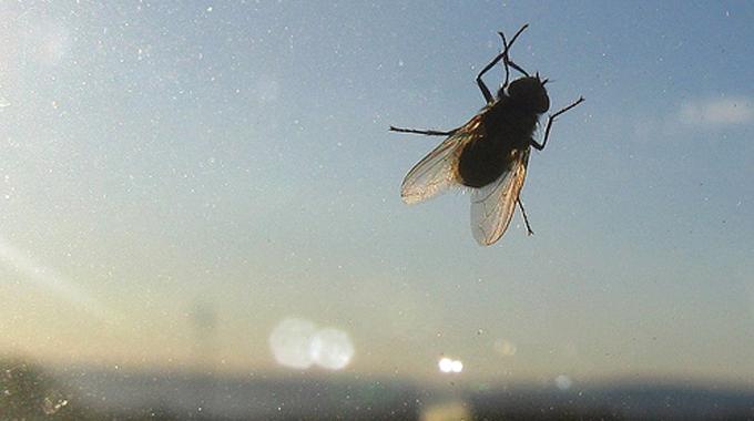 l 39 astuce pour nettoyer les traces de mouches sur les vitres. Black Bedroom Furniture Sets. Home Design Ideas